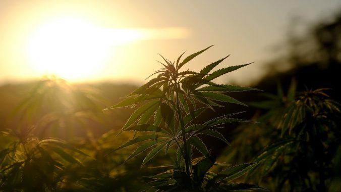 kjøpe beste ETF for cannabis